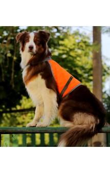 Сигнальный жилет для собак / OSSO Fashion (Россия)