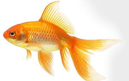 Для рыб