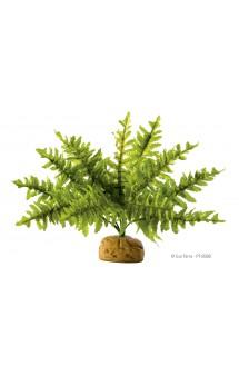 Boston Fern, Бостонский папоротник, искусственное растение / Hagen (Германия)