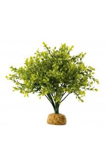 Boxwood Bush, Самшит, искусственное растение / Hagen (Германия)