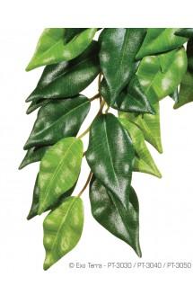 Ficus, Фикус, искусственное растение / Hagen (Германия)