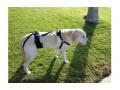 купить шлейка для пожилых, травмированных собак