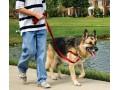 купить корректирующую шлейку Easy Walk