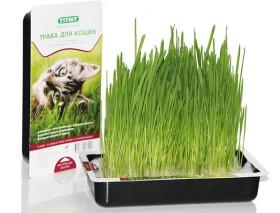 Трава для кошек / TiTBit
